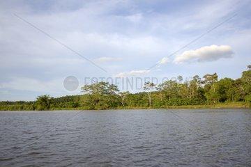 Kinabatangan River - Sabah Borneo Malaysia