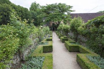 Rose-trees 'Ghislaine de Féligonde' at Château de Losse