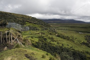 Huge hacienda with an enclosure for Spectacled Bears Ecuador