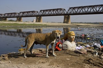Divinity bust and Dog riverside Yamouna Agra Uttar Pradesh