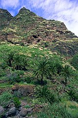 Palm trees on a volcanic valley Canaries Isles Spain