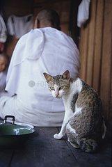 Cat sitting behind a Buddhist nun Kampuchea