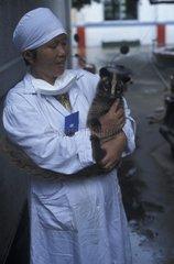 Civette palmiste masquée dans les bras de son éleveur Chine
