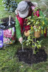 Heath earth add on a camellia with chlorisis