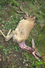 Expertise to determine the cause of death of a Deer