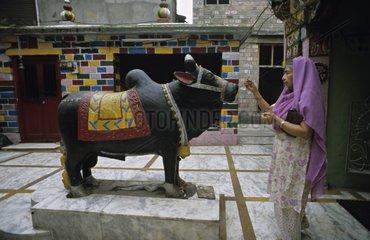 Offering to Nandi Mandi Himachal Pradesh India