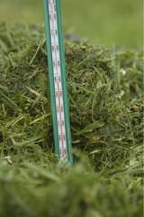 Thermometer and fresh mowing for composting