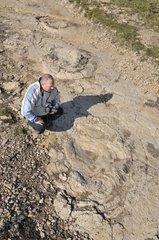 Naturalists observing footprints of Sauropod Dinosaurs