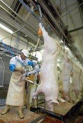 Eviscération de porc avançant dans la chaîne d'abattage