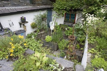 Vegetables cultivated in raised pots Wales