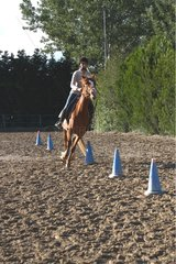 Young rider performing an exercise in slalom