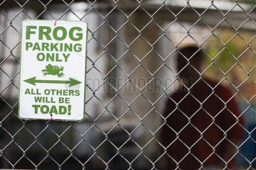 Breeding Oregon Spotted Frog - Washington USA