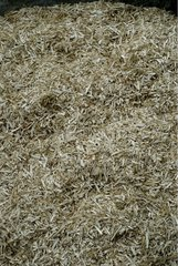 Straw of Hemp to mix to obtain cement France