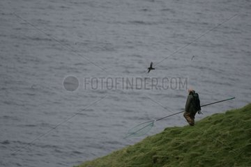 Atlantic Puffin flying and Puffins hunter walking Iceland
