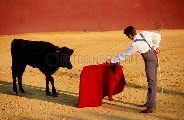 Andalousie  Séville  corrida