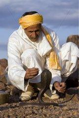 Snake charmer taming an Egyptian Cobra Morocco