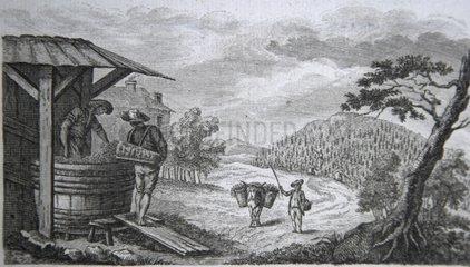 Lithographie de scène de récolte du raisin France