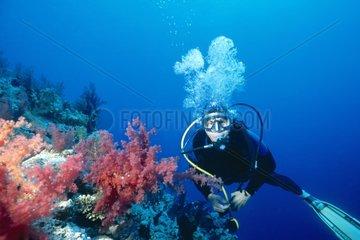 Plongeur devant un récif corallien en Mer Rouge