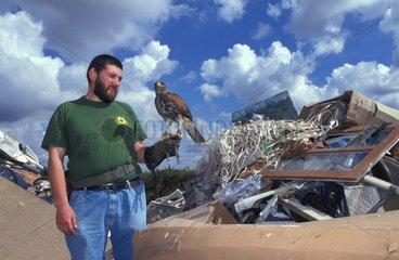 Fauconnier et son rapace destiné à la chasse aux nuisibles