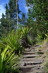long-distance footpath GRR1 in Reunion