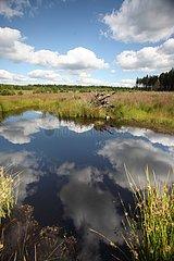 Cloud refelction in a peat bog in Belgium