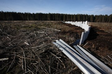 Reat bog restoration in Belgium