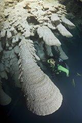 Scuba Diver in the Zapote Cenote - Yucatan Mexico
