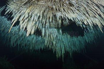Stalactites in the Cenote Dreamgate - Yucatan Mexico