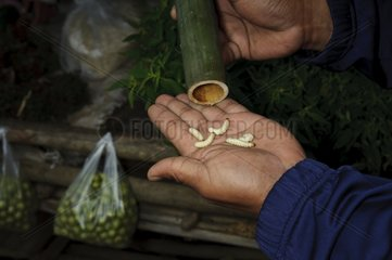 Insect larvae for consumption in Thailand