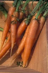 Stillife of Carrots