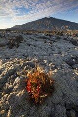 Lava field at the foot of the volcano Snæfellsjoekull Iceland