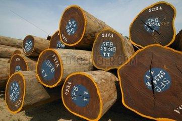 Grumes de bois tropicale destinées à l'exportation