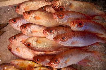 fish market in Hongkong