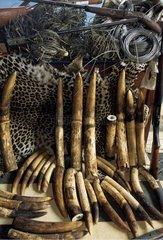 Produits du braconnage dans la réserve de faune du Dja