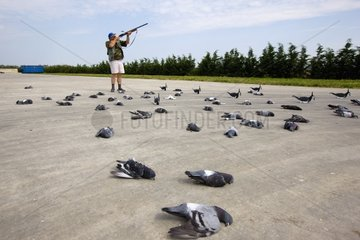 Elimination of pigeons around a breeding in Italy