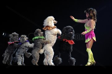 Spectacle of Dogs with their trainer