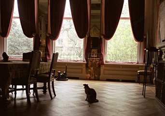 The large living room of the Cat Museum Holland