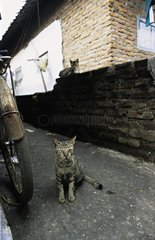 Cats in a little street Java