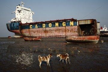 Shipbreaking yards in Bangladesh