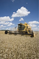 Harvester in a wheat field