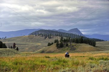 Carriage in the landscape of Yellowstone NP USA