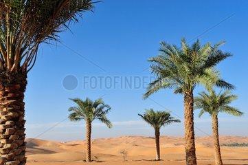 Palm trees in the desert of Rub al-Khali Abu Dhabi