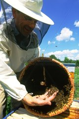 Swarm beekeeper and recovered in a basket Paris France