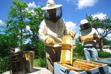 Beekeeper brushing a radius of HiveParis France