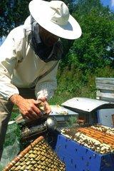 Beekeeper smoking a hive Paris France