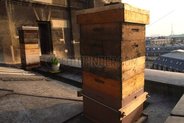 Apiary on the roof of the Paris Opera France