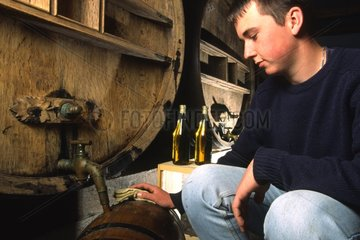Beekeeper withdrawing from a barrel of mead France