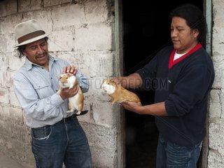 Man buying a guinea pig to cook Province Imbabura Ecuador