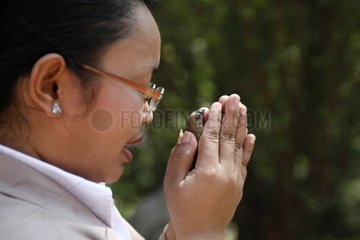 Woman making a vow before releasing a bird Wat Cambodia