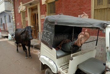 Cows and rickshaws in the streets of Varanasi in India